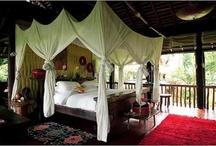 Jungle theme bedroom / by Angi Huffman