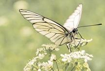 Macro butterflies / Photos of butterflies