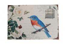 Birds! / We love bird products at Velvet, especially Owls.