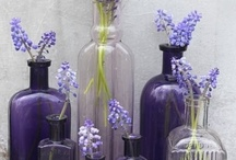 Lavender, Lilac and Purples