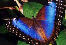 MaRiPoSaS / Maestras de la Transformación, del Renacer, la Belleza y la Libertad