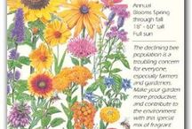 Attracting Bees Seeds - Botanical Interests