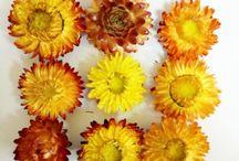 Flori de paie
