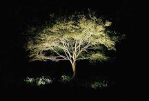 Illuminazione Alberi, Piante e fiori