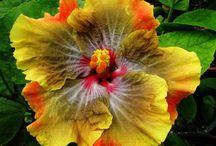 Fleur de jardin diverse