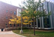 Fall 2015 at the Morgan Library / With colors of green and gold dusting the leaves of trees around campus, the Morgan Library remains an inviting place to learn and study on the Colorado State University campus.