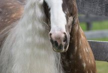 Zirgi
