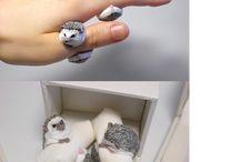 Кольца С Животными