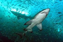 Best SCUBA Diving in Australia / Lets Go Adventures provides the best SCUBA diving in Nelson bay, Port Stephens, Australia.