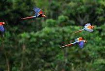 Nuestra Amazonía / La región amazónica es una de las cuatro regiones naturales del Ecuador. Comprende las provincias de Orellana, Pastaza, Napo, Sucumbíos, Morona Santiago, Zamora Chinchipe. Se extiende sobre un área de 120.000 km² de exuberante vegetación, propia de los bosques húmedo-tropicales. Sus límites están marcados por la Cordillera de los Andes en la parte occidental de esta región, mientras que Perú y Colombia en el límite meridional y oriental, respectivamente