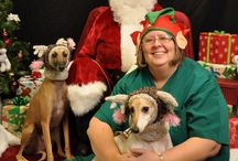 Kingsbrook's Santa Pictures 2013 / This year KAH had Santa Paws come to our hospital! All donations went towards the Kylie and Cricket Memorial Fund.  #Animal Hospital #Veterinarian #Pets #KAH #FrederickMaryland #SantaPaws #Christmas #HoHoHo #KylieandCricketFund