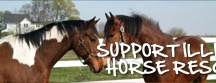 Animal's  / http://www.illinoishorserescue.org/#_ / by Gina Pecho