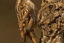 "Birds in the Natural Park ""Sierra de Grazalema"""