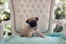 My sweet puppy pug Tyson :)