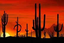 Must See Arizona