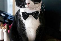 The Fun Side of Tuxedos