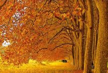 Autumn inspiration / These are some guidelines and ideas for my project