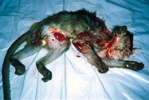 Animal Testing / People are testing on animals and its not right that they suffer for our benfit