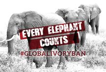 Global Ivory Ban / Climb Kilimanjaro to help spread awareness on the critical need for a global ivory ban decision at the 17th meeting of the Conference of the Parties (CoP) taking place in Johannesburg, South Africa from 24 September to 5 October 2016.