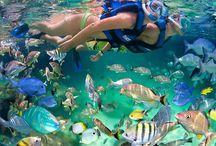 Cancun Theme Parks - Parques Temáticos en Cancún