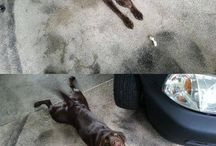 Animals that made me chuckle!!! / Funny pet pictures to lighten your day
