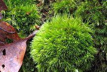 Pics of moss