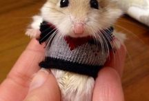 Cute Little people &  Animals / by Doris Ballew