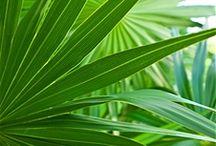 foliage / visual inspiration, foliage, botanical, plants, nature, pattern, leaves