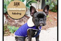 fabdog® of the Month / Instagram Contest Winners for fabdog® of the Month!