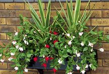 Hanging Baskets / Create a great first impression with beautiful hanging baskets