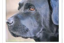 #CADBarrique / Haus-, Hof- und Herzenshund