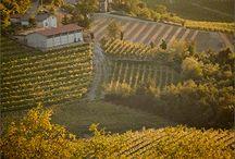 Wine Vineyards / by Majestic Wine