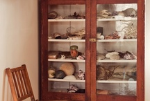 Shadow box - collection: NATURE / Nature related collection & shadow boxes: sea shells, plants, insects, bones, etc. / by morsa (Sergio Morales T.)