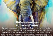 Elefantes ❤️