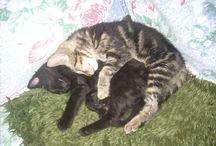 Cat love <3