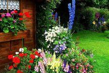 Gardens. / by Bailey Kinsey