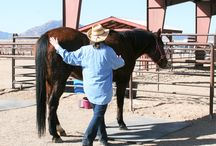 HwH Volunteer Orientation - 2016 Session / With the 2016 Sessions nearing their start date, HwH hosted both a New Volunteer and Returning Volunteer Orientation. The turnout was wonderful and the enthusiasm shown by all should make for a wonderful 24th year of Horses with Hearts service to Yavapai County.