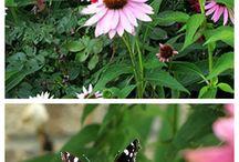 Bee Keeping / by Jennifer Kidd