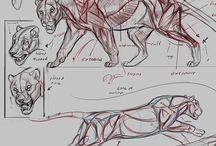 Feline anatomy