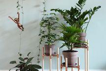 Pflanzen und Pflege