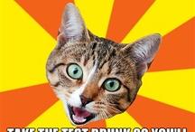 Meme - Bad Advice Cat / by Gaurav Sharma
