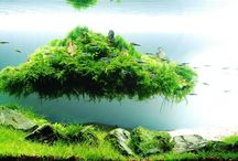 Aqua ogród