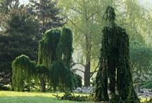 rastliny-spolocenstva / by r z