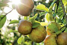 Garden: Apples