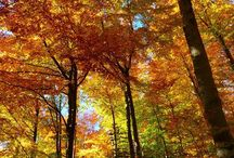 Happy First Day of Autumn! The Equinox is here, and so too are Autumn Savings! Visit our website for more details & to view inventory.