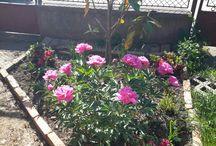 Garden (kertem)