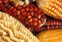 Can GM Food be Certified as Organic Food? / Can GM Food be Certified as Organic Food?