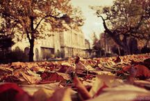 about \autumn. / by Melissa Rinaldin