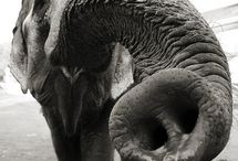 Elephant Amazement / These precious creatures need our protection and appreciation.