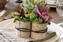 succulent wedding / by Saundra Hadley